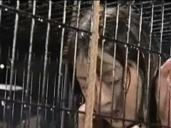 caged-and-sprayed-asian-teen